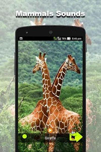 screenshot of 150 Animal Sounds version 39