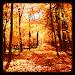Download Autumn Wallpaper 1.4 APK