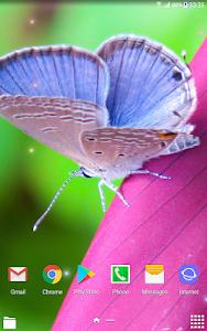 Download Beautiful Summer HD Wallpapers 1.0.4 APK