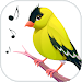 Download Bird Calls, Sounds & Ringtones 5.0.2 APK