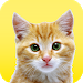 Download My Real Talking Cat 1.0.0 APK