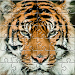Download Puzzle Zoo 1.2 APK