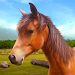 Download Run Horse Run 1.3 APK